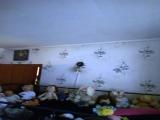 thumb_8139_00205beda249864c370aa0cdd723e303a3c50b74cb7a0eafa6444995a50b141b51753a458865b.jpg