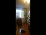 thumb_9957_imgf295336f021be5771719c062ecfe4051v.jpg